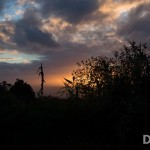 20121113-DSC_2908