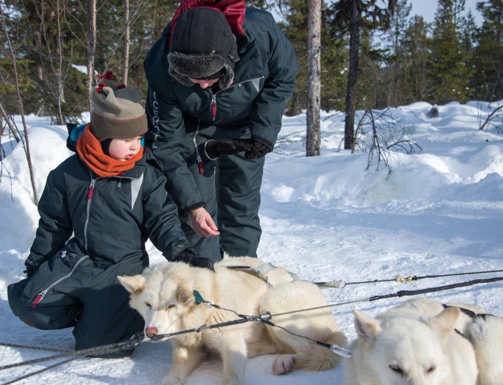 Merle und die Hunde Jukkasjärvi Vildmarksturer
