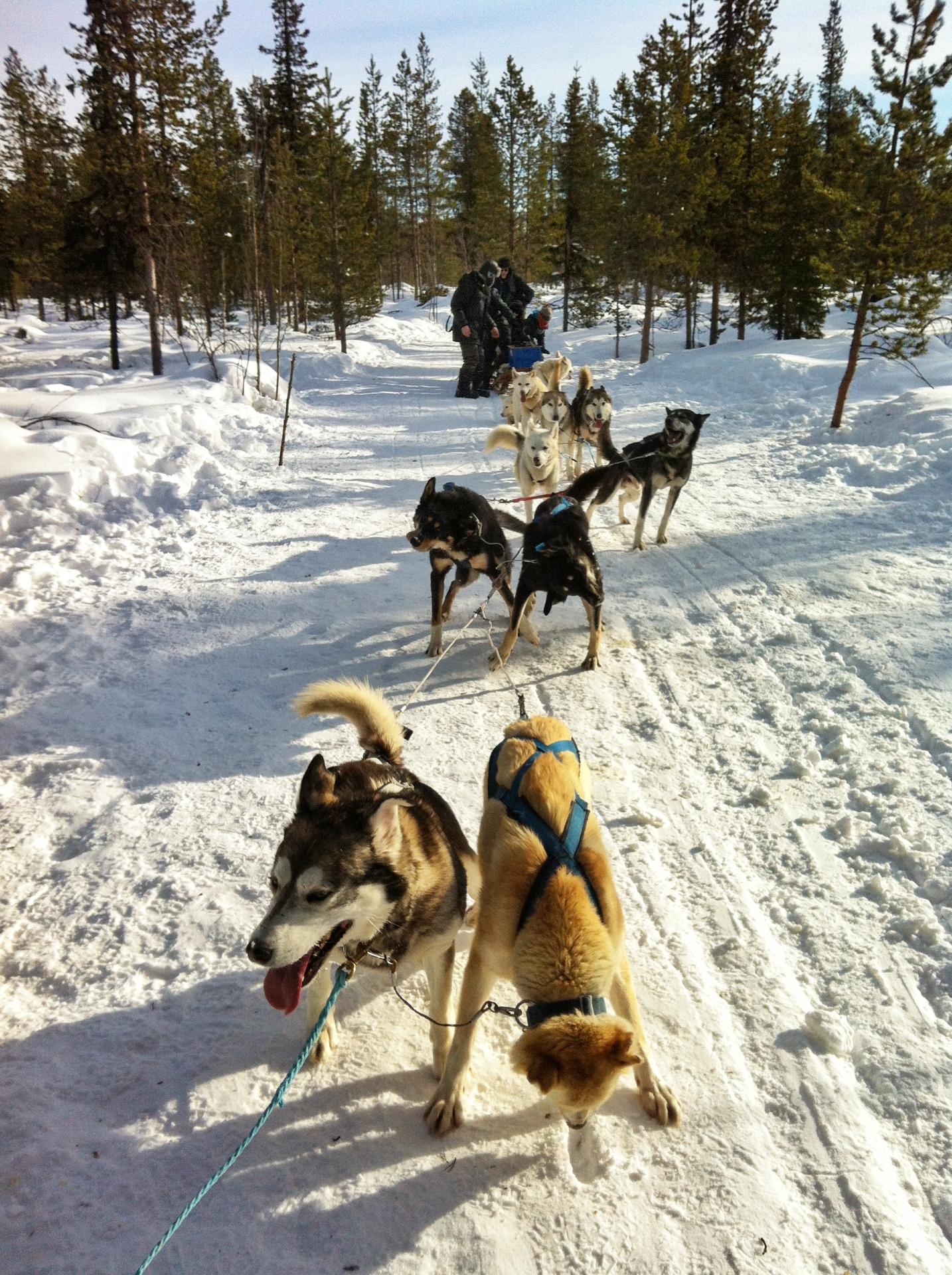 Hundeschlittenfahrt mit JVT