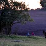 Auf der Weide bis zum Sonnenuntergang