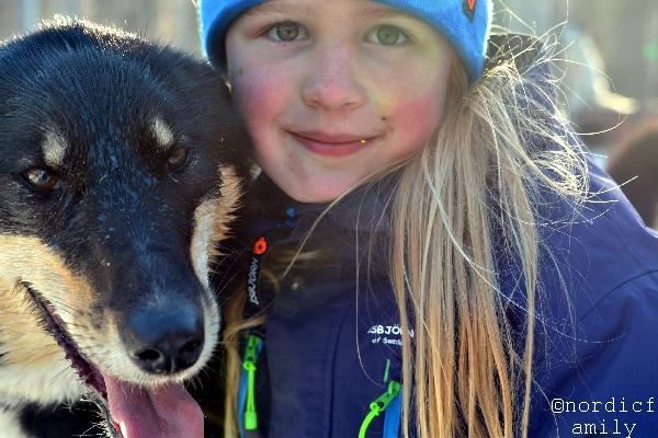 schlittenhund_nordicfamily