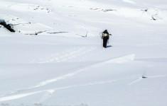 arctic biodiversity