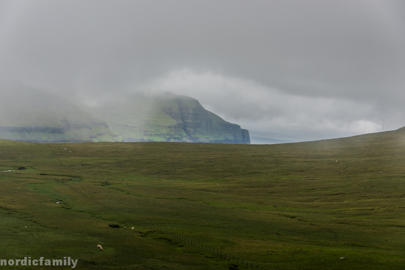 nordicfamily_faroeer-2