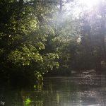Paddeln im Spreewald