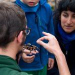 Urbanität und Vielfalt - Spinnen