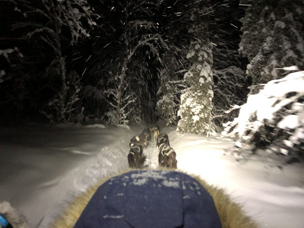 Hundeschlittentour mit Familie - Schneegestüber