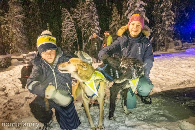 Hundeschlittentour mit Familie - Hunde streicheln