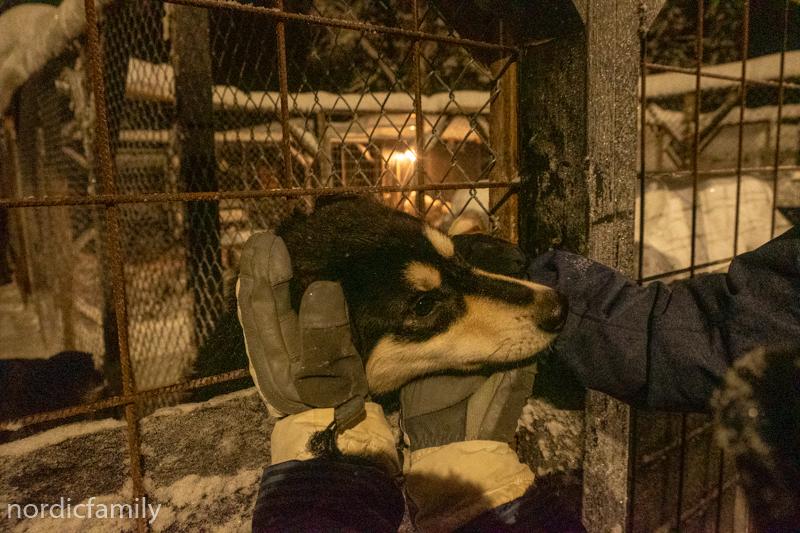 Hundeschlittentour mit Familie - Kennelrundgang