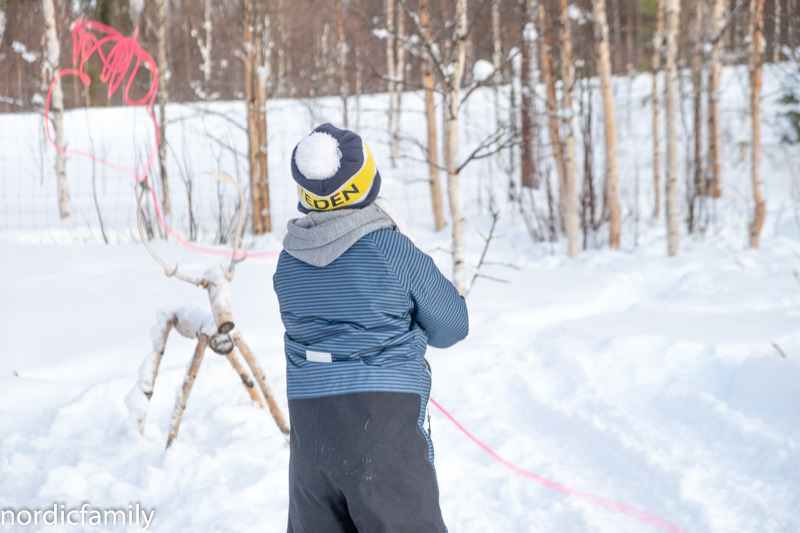 Rentiere Sami Winter Tornedalen Rentiere