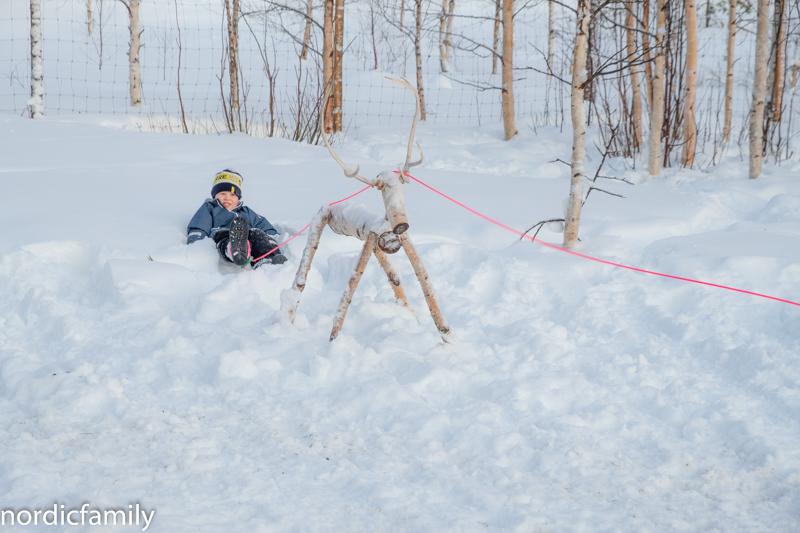 Rentiere Sami Winter Tornedalen
