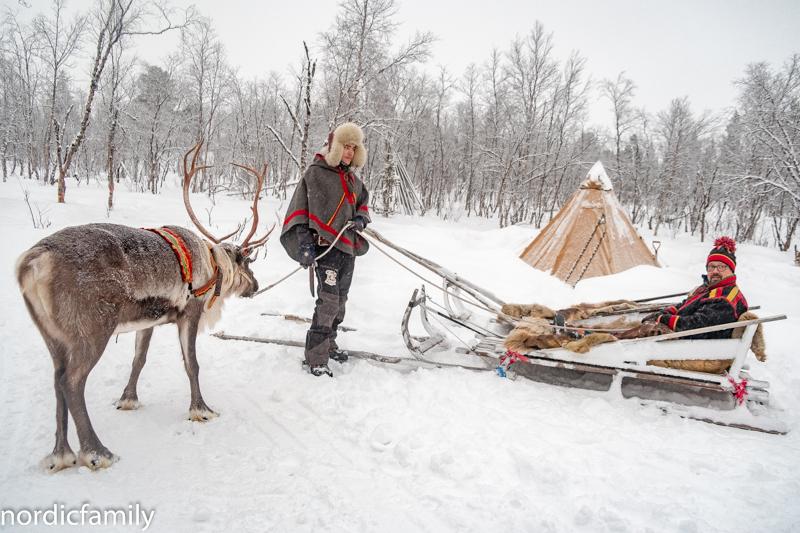 Rentiere in Lapland