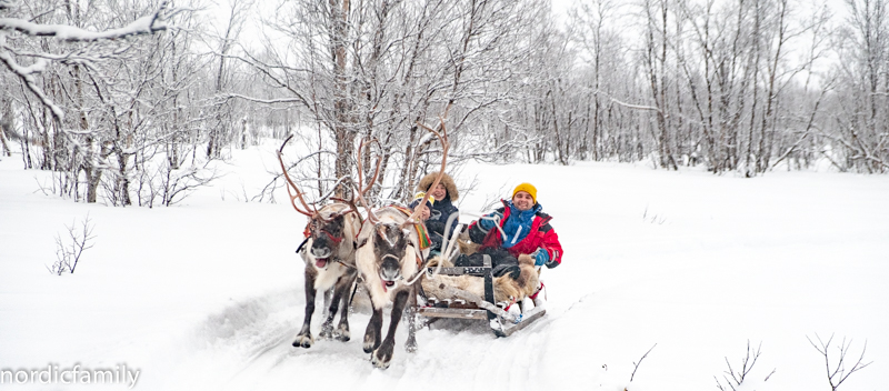 Rentierschlittenfahrt in Kiruna Lapland