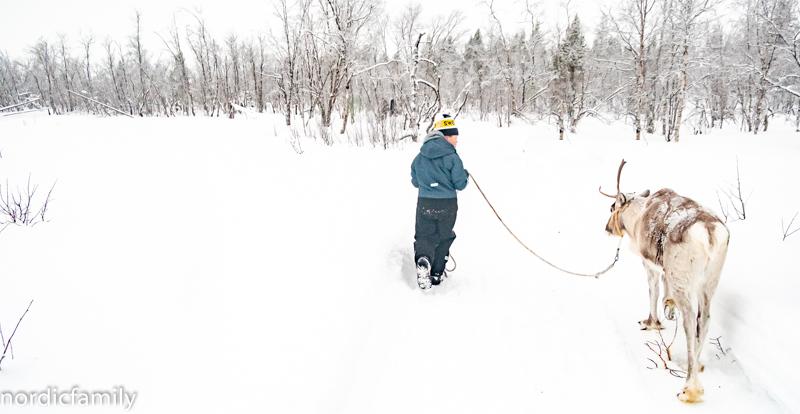 Kiruna Lapland Winter