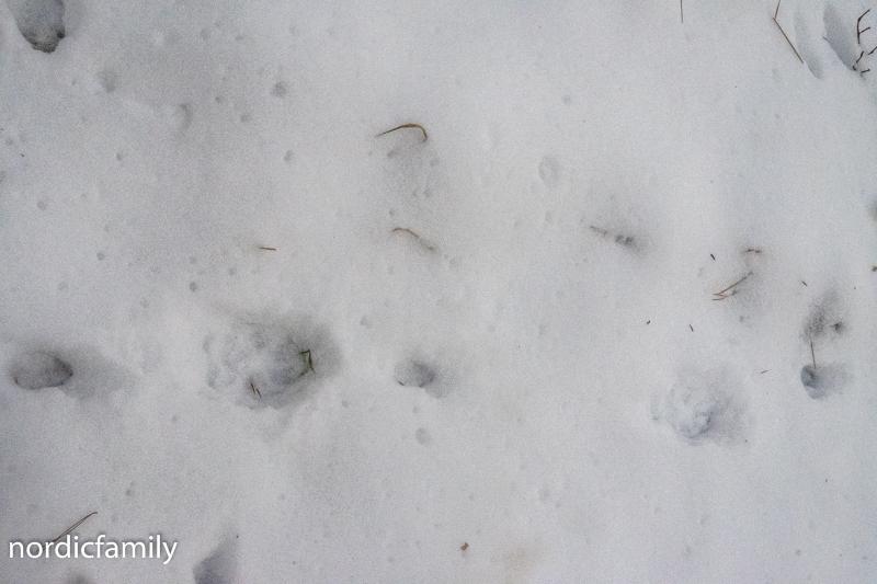 Winterausflug Hoher Fläming  Wolfsspur