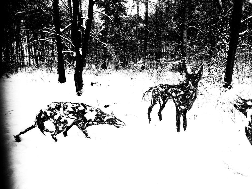 Winterausflug Hoher Fläming  Wolf
