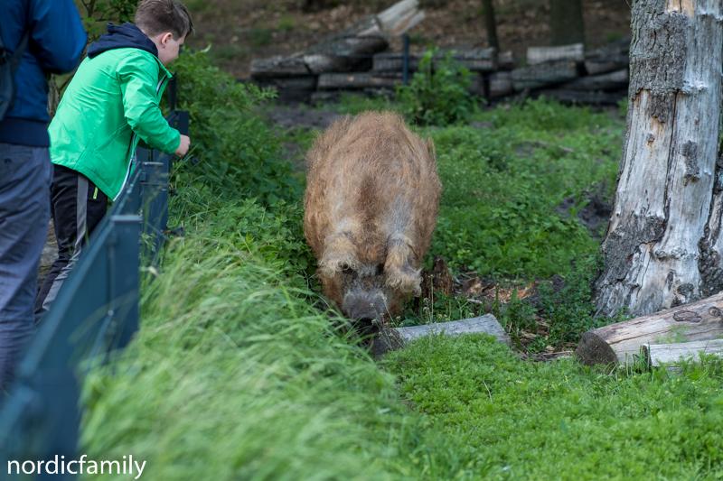 Wildpark Schorfheide Barnim
